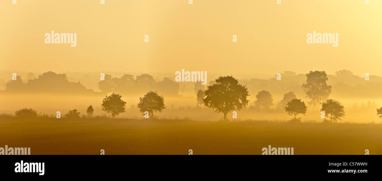 Los Países Bajos, Meerkerk, granja y los árboles en la niebla de la mañana al amanecer. Imagen De Stock