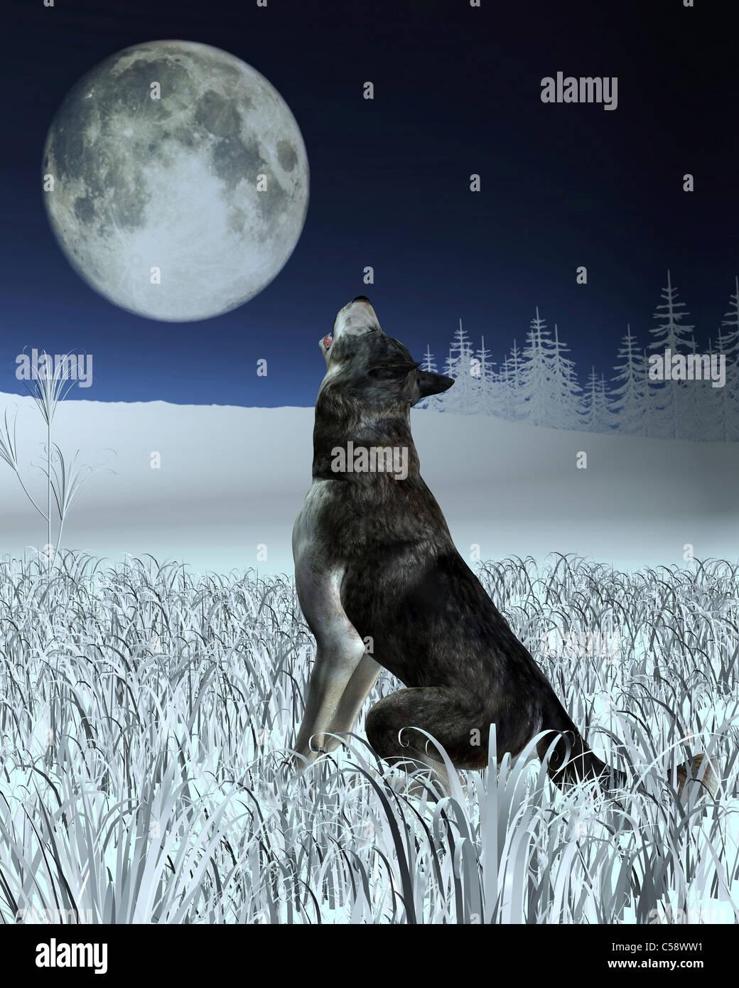 Lobo Aullando A La Luna Llena Foto Imagen De Stock 37689933 Alamy