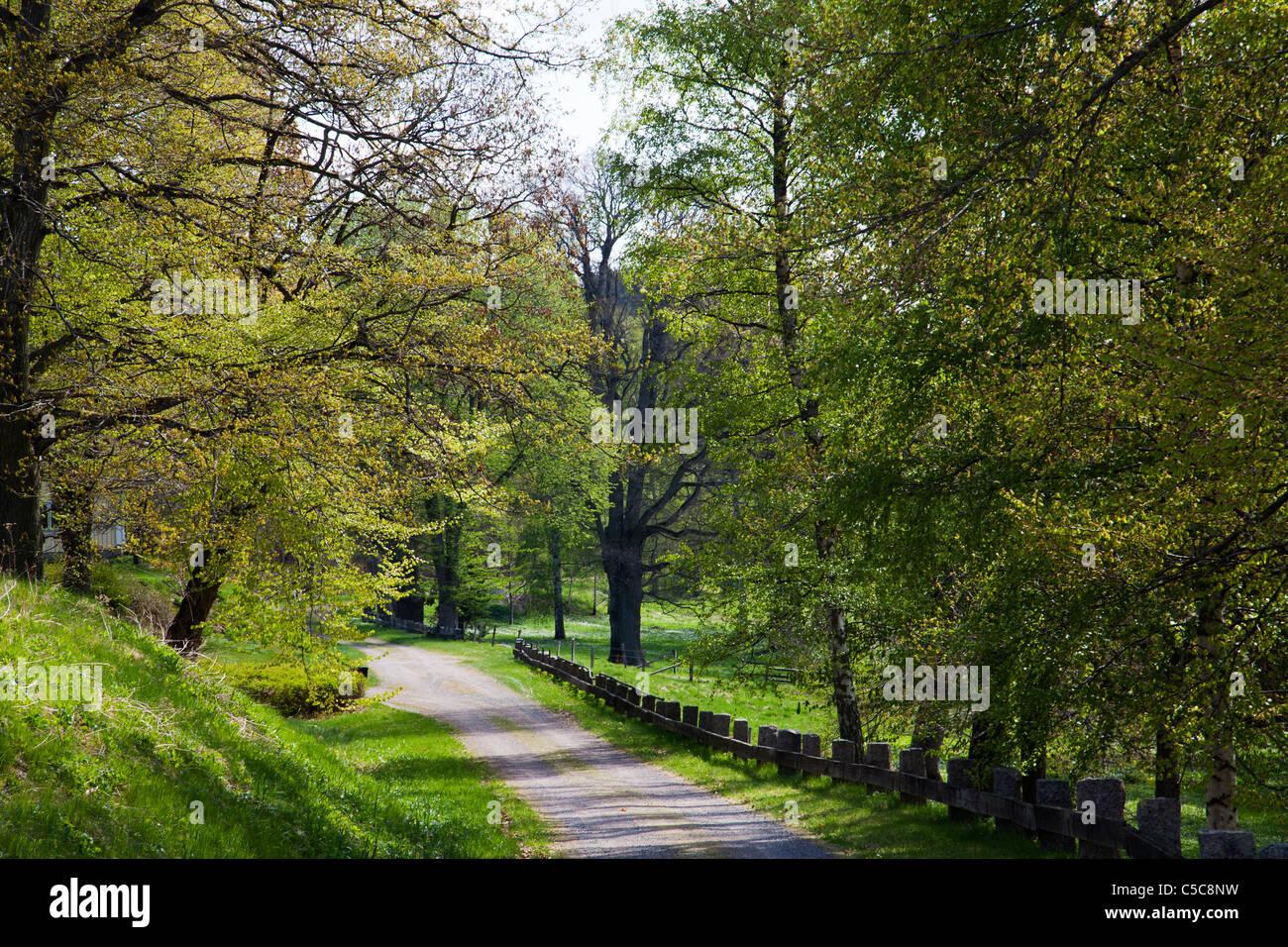 Country Road Lane hasta la primavera paisaje verde de Suecia Imagen De Stock