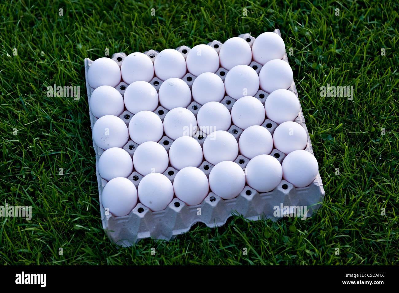 Vista superior de cerca de 30 huevos blancos en una caja de cartón sobre el césped Imagen De Stock