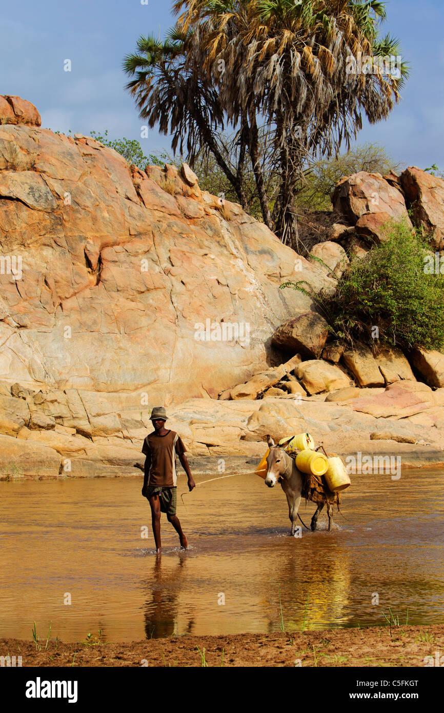 Burro siendo llevado a través del río Uaso Nyiro transportar bidones de agua en Kenia Imagen De Stock