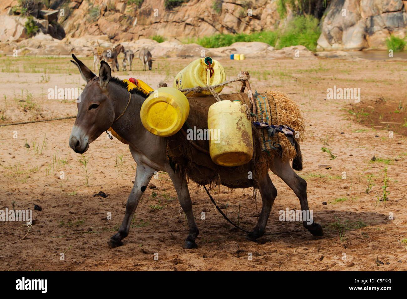 Burro con tambores de agua a orillas del río Uaso Nyiro en Kenya Imagen De Stock