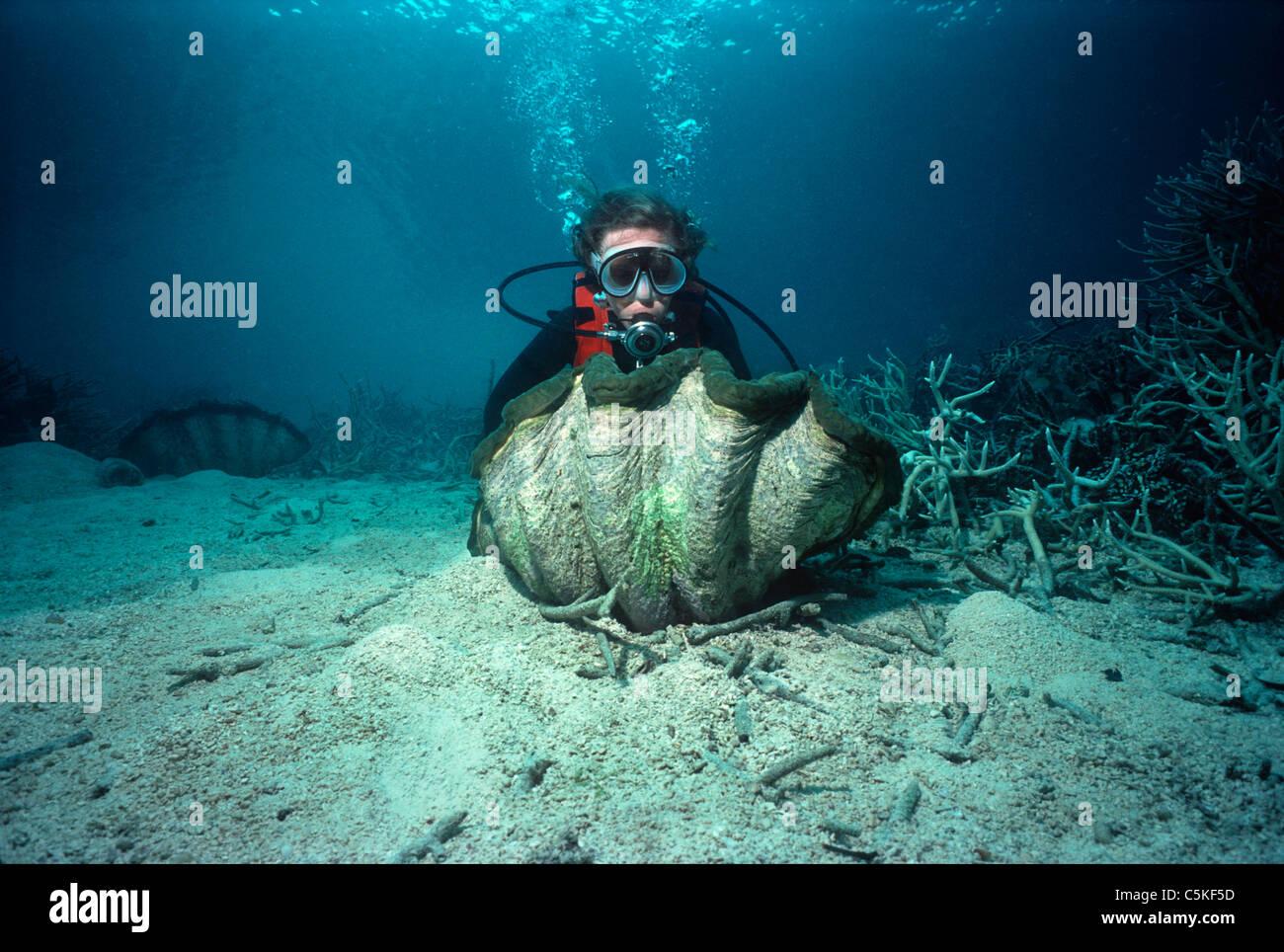 Buceador examinando una gigantesca concha estriada (Tridacna squamosa) sobre un arrecife de coral. Palau, Micronesia Foto de stock