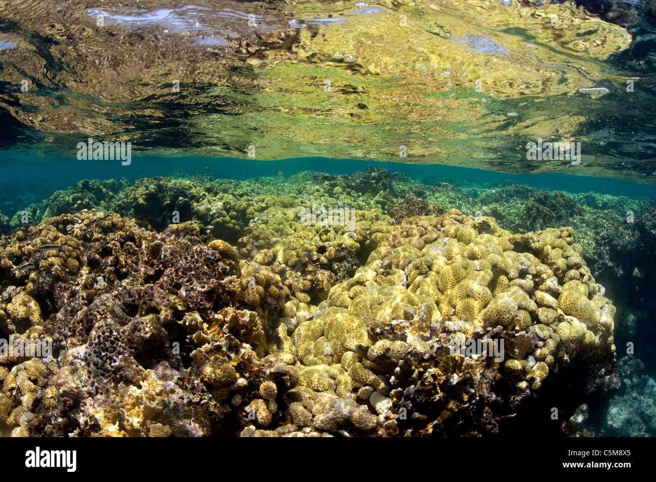 Un arrecife de coral en la superficie plana del océano en las Islas del Cisne, un grupo de islas apartadas Imagen De Stock