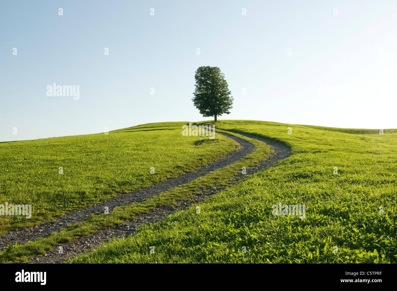 Alemania, Baviera, Allgäu, único árbol junto al camino agrícola Imagen De Stock