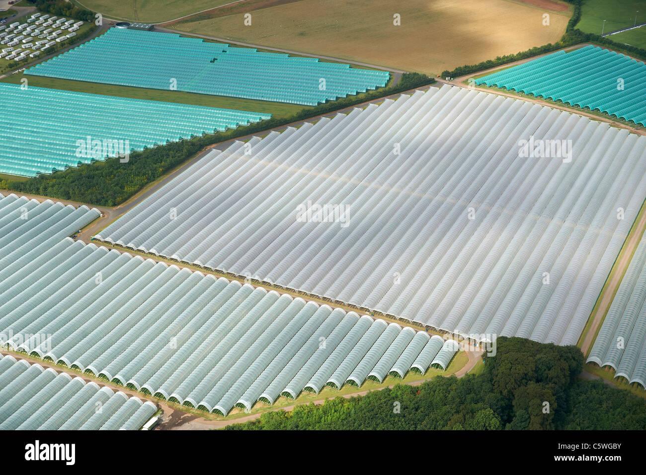 Los túneles de polietileno - el crecimiento de cultivos bajo plástico, Leeds (norte de Inglaterra Imagen De Stock