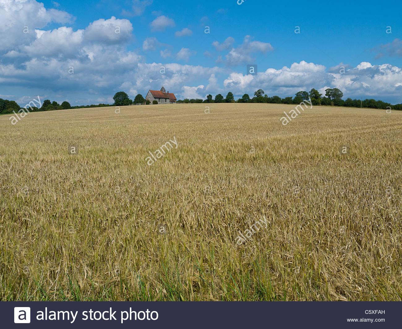 Iglesia Idsworth y campo de cebada Hampshire Inglaterra Imagen De Stock