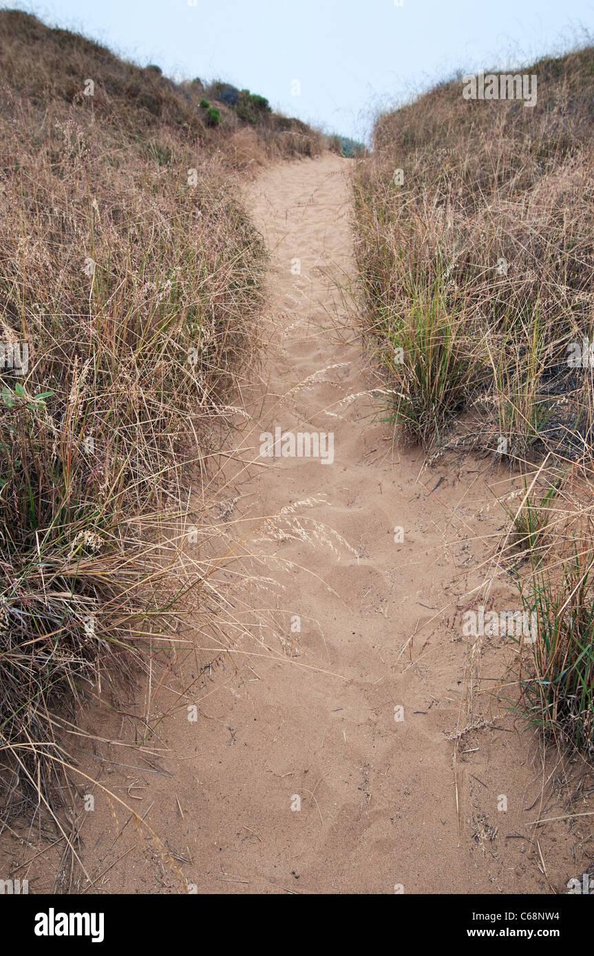 Un sendero hacia la costa en Montona de Oro State Park. Imagen De Stock