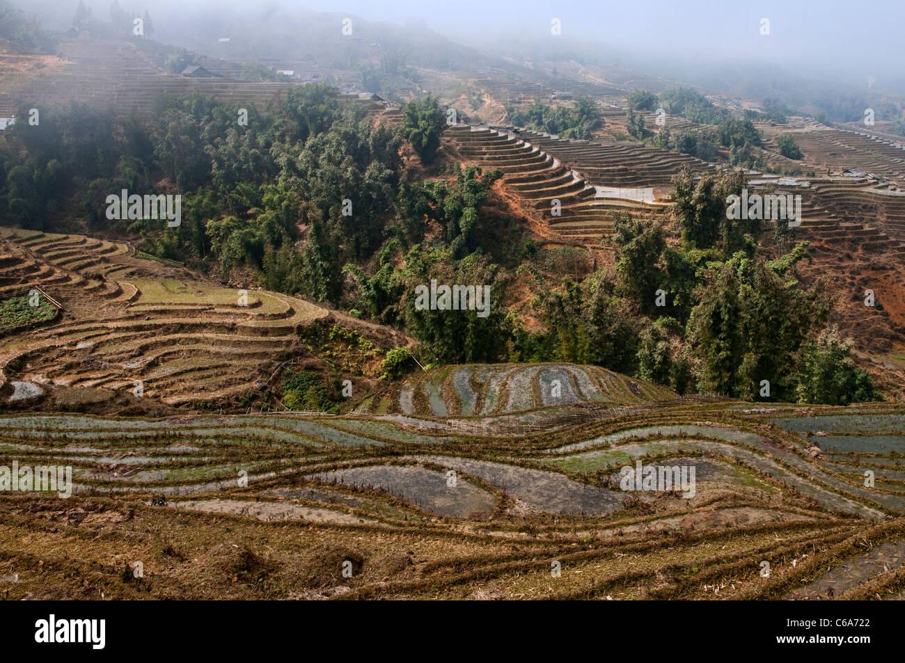 Terraza De Los Campos Del Norte De Vietnam Cerca De Lao Cai
