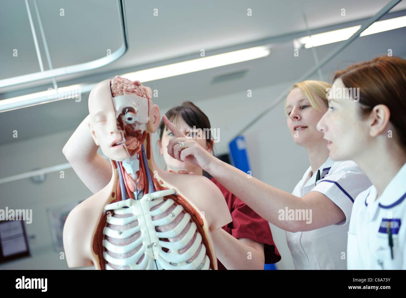 Los estudiantes de enfermería, femenina, blanca y maestro ...