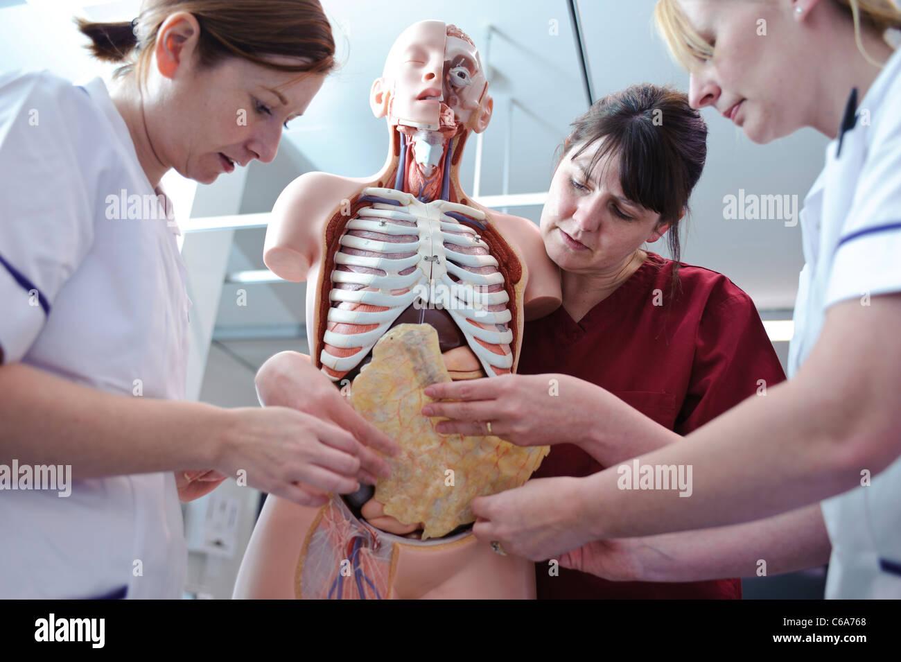 Los estudiantes de enfermería, femenina, blanca y maestro interactuando con la anatomía humana modelo Imagen De Stock