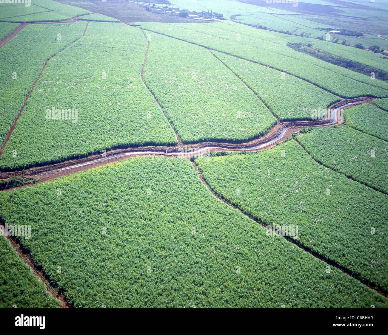 Vista aérea de plantaciones de piña, Oahu, Hawaii, Estados Unidos de América Foto de stock