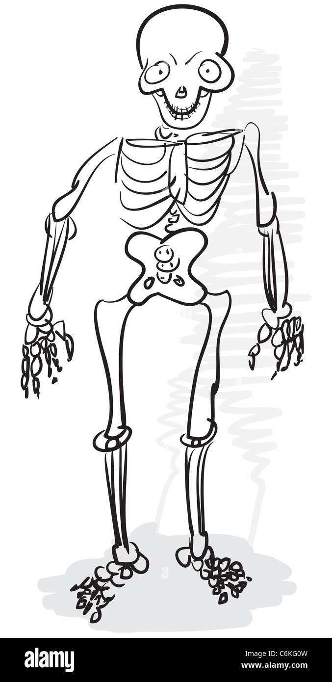 Rough estilizado dibujo monocromo - un esqueleto humano Foto ...
