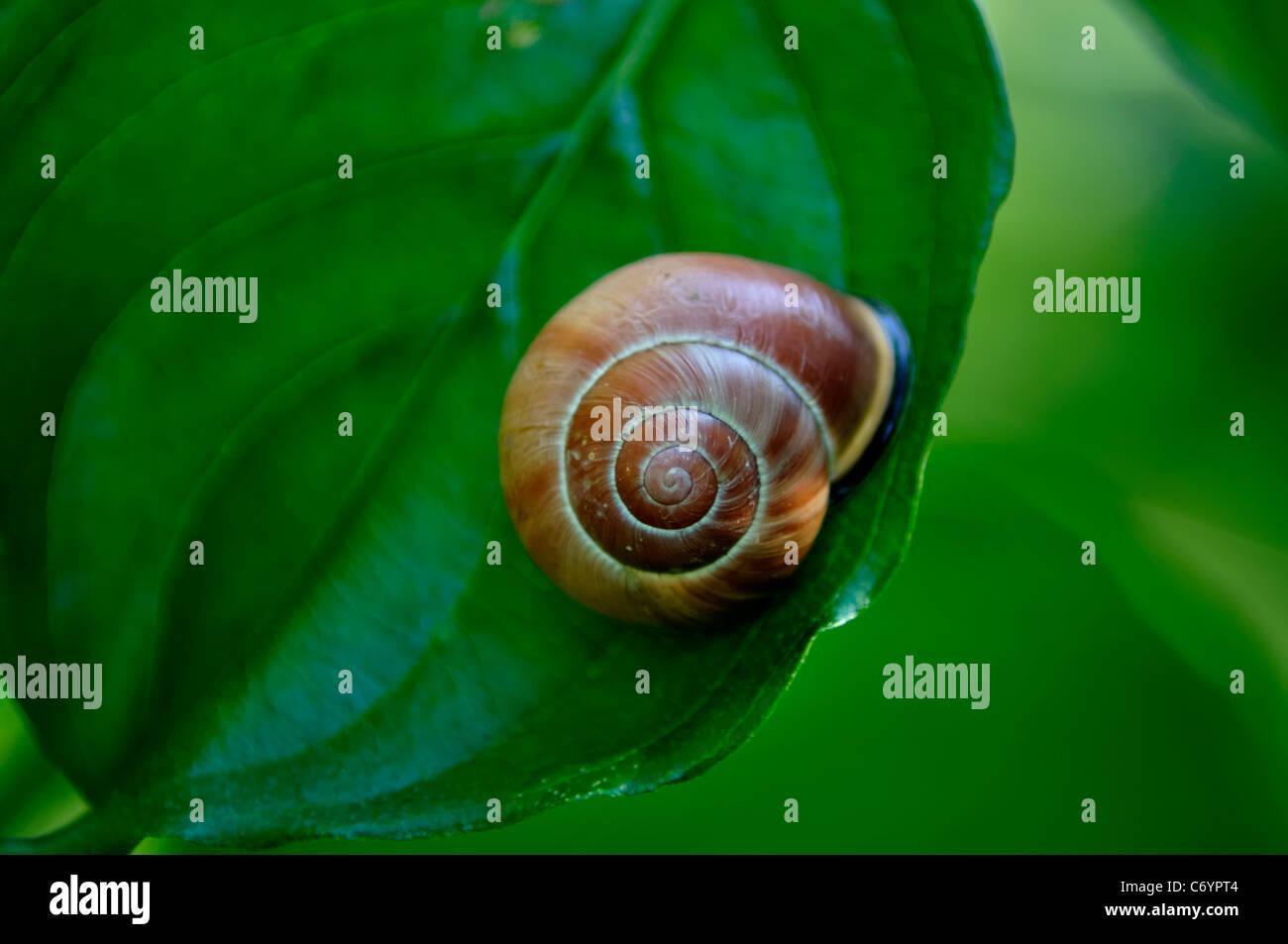 Rojo; Hoja; árbol; antecedentes; origen; belleza; rama; marrón; verde; Imagen De Stock