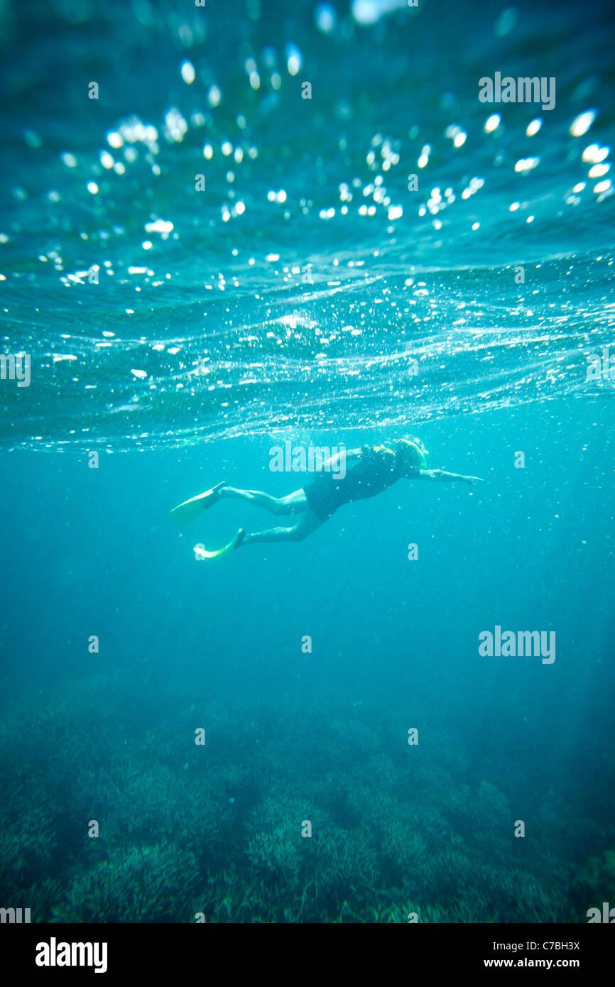 Diver en el arrecife cerca de la Isla Heron parte oriental es parte del Parque Nacional Cayos Capricornia Great Foto de stock