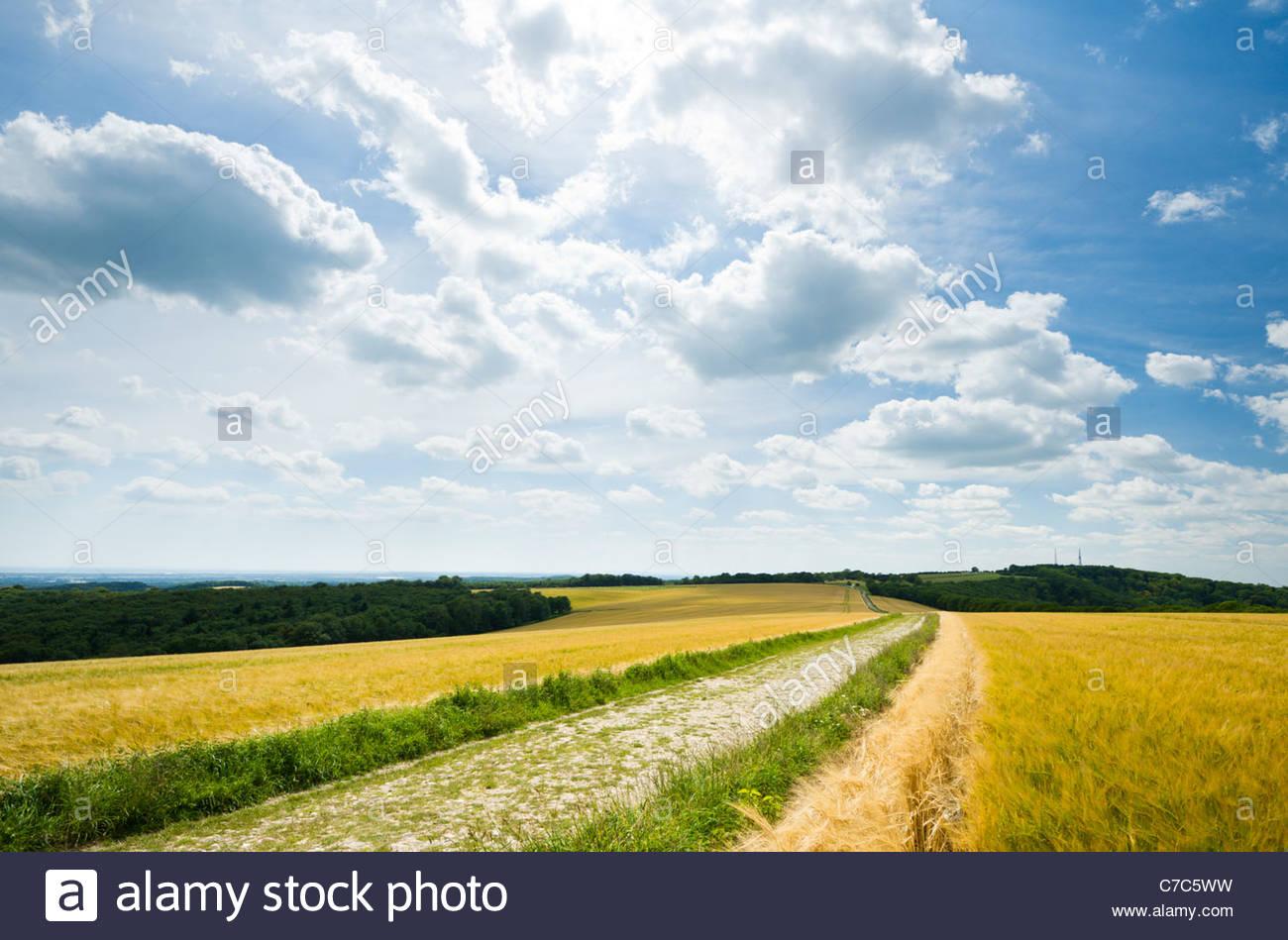Los South Downs Way en Bignor Hill Imagen De Stock