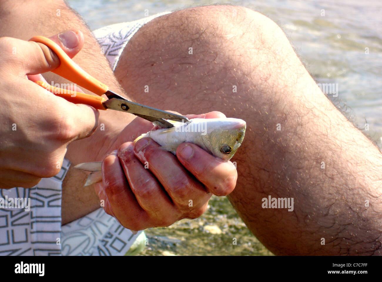 Pescar peces en Nitzanim reserva nacional entre Ashkelon a Ashdod, en la costa del mar Mediterráneo. Foto de stock