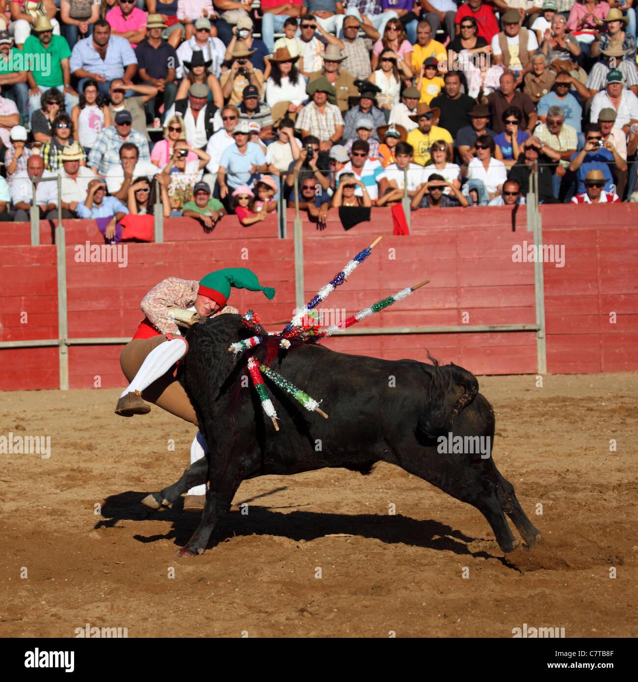 Un torero (Forcado) intenta aferrarse a un toro de carga durante una corrida  de 0f0f45c51b3