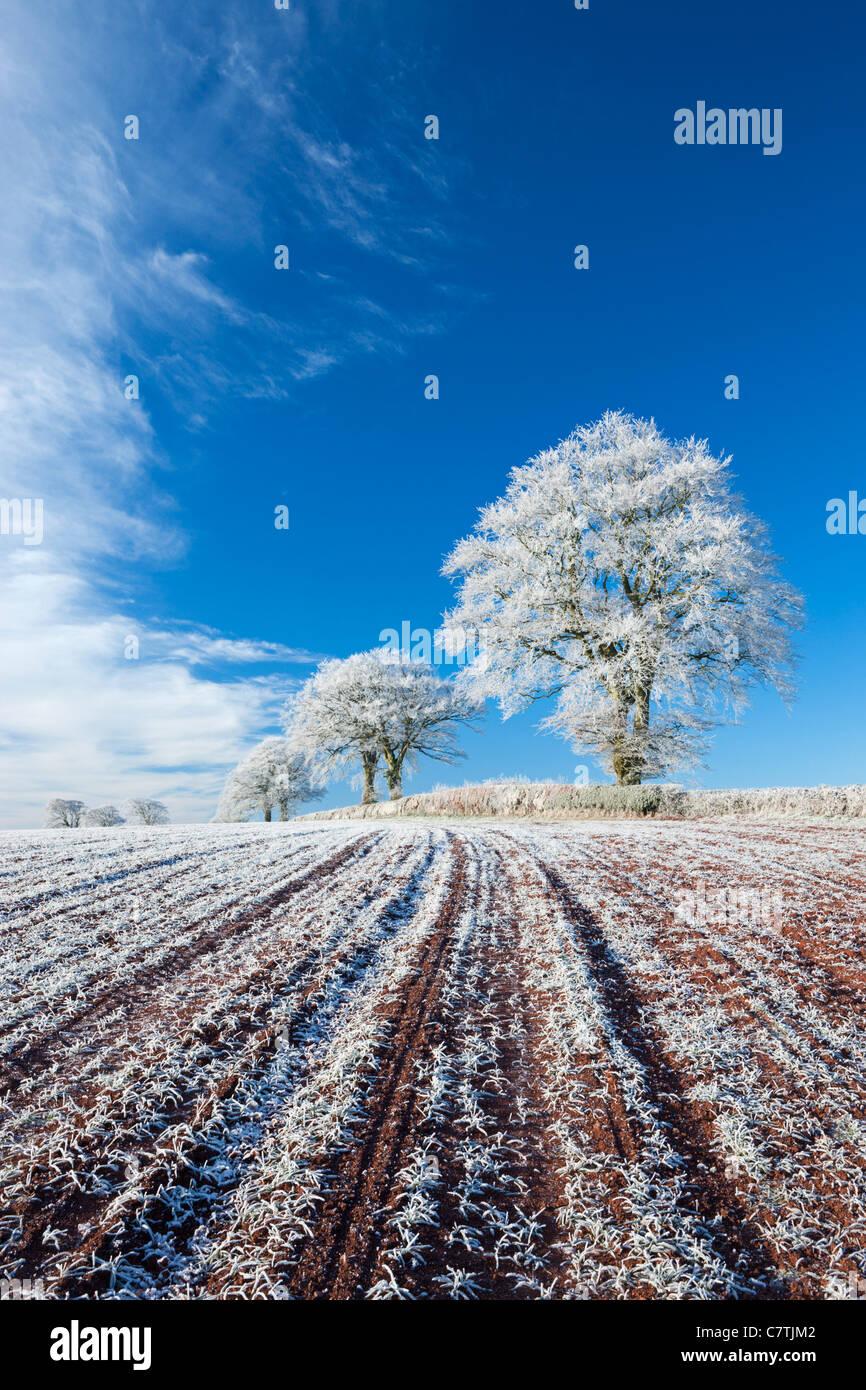 Esmerilado Hoar de tierras de cultivo y árboles en invierno, a proa, a mediados de Devon, Inglaterra. Invierno (diciembre de 2010). Foto de stock