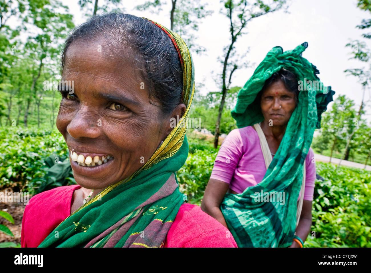 Bangladesh, Rangamati, retrato de mujer trabajando en las plantaciones de té Imagen De Stock