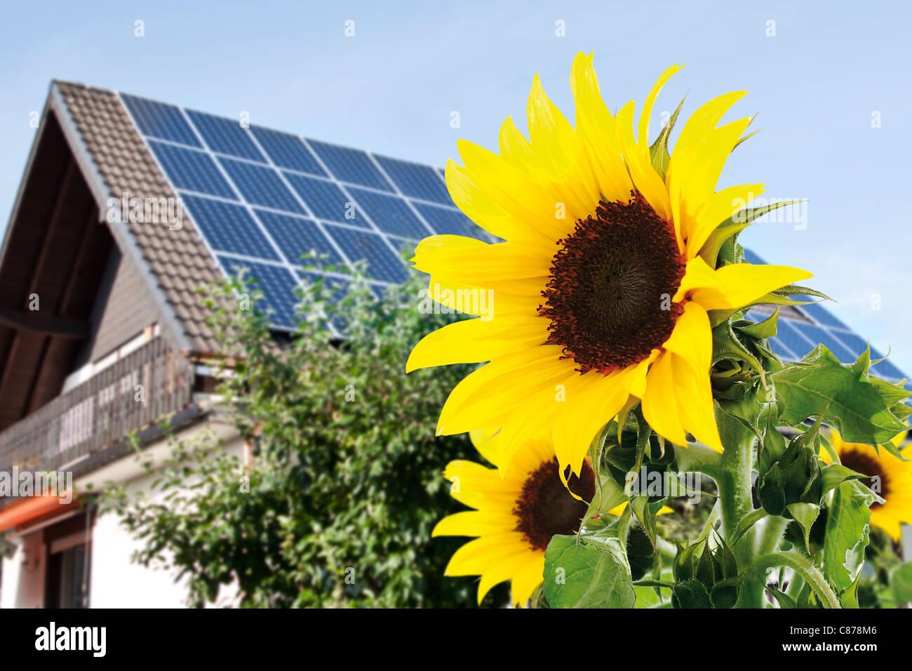 Alemania, Colonia, girasoles en la parte frontal de la casa con paneles solares Imagen De Stock