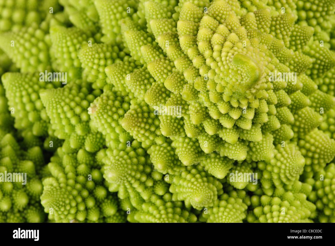 Cerca de una coliflor, naturalezas románico propios fractales. Imagen De Stock