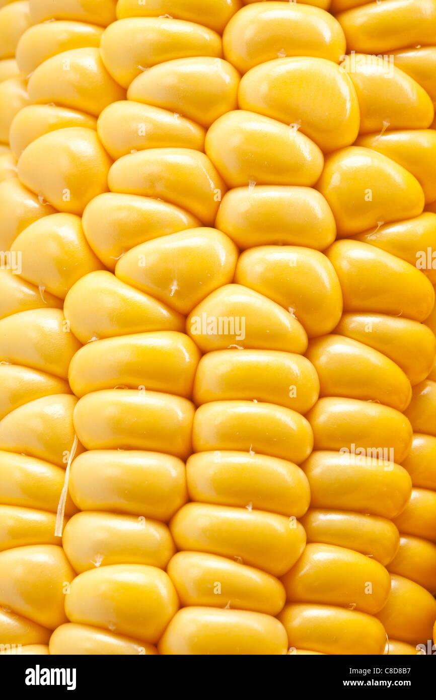 Primer plano de maíz. Imagen De Stock