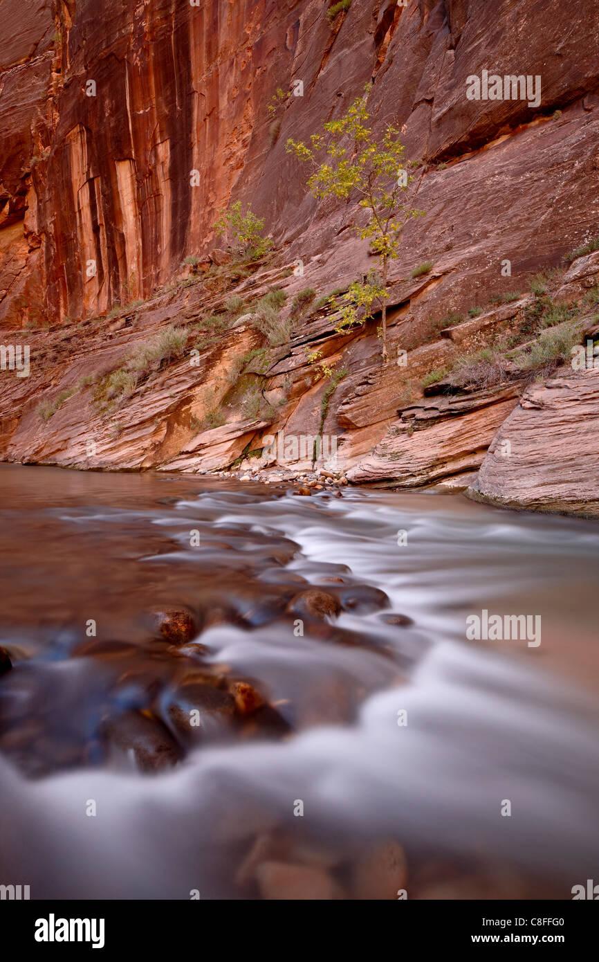 Cascada y árbol en el otoño, el estrecho del Virgin River, el Parque Nacional de Zion, Utah, Estados Unidos de América Foto de stock