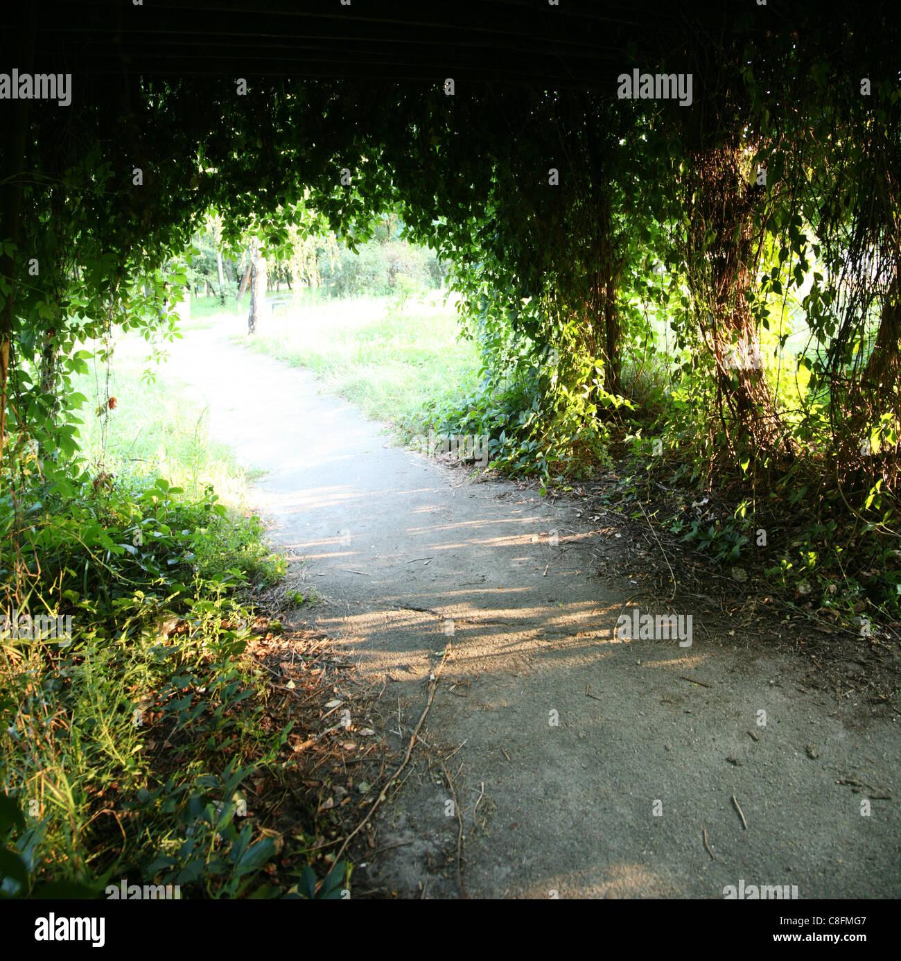 La escena del parque. Los árboles forman un arco. Imagen De Stock