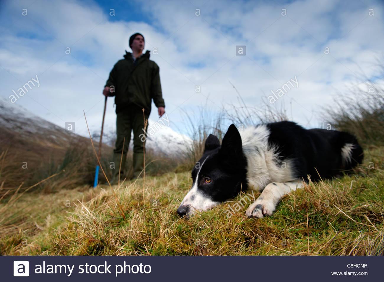 Un perro blanco y negro se encuentra en la hierba cerca de su joven dueño. Imagen De Stock