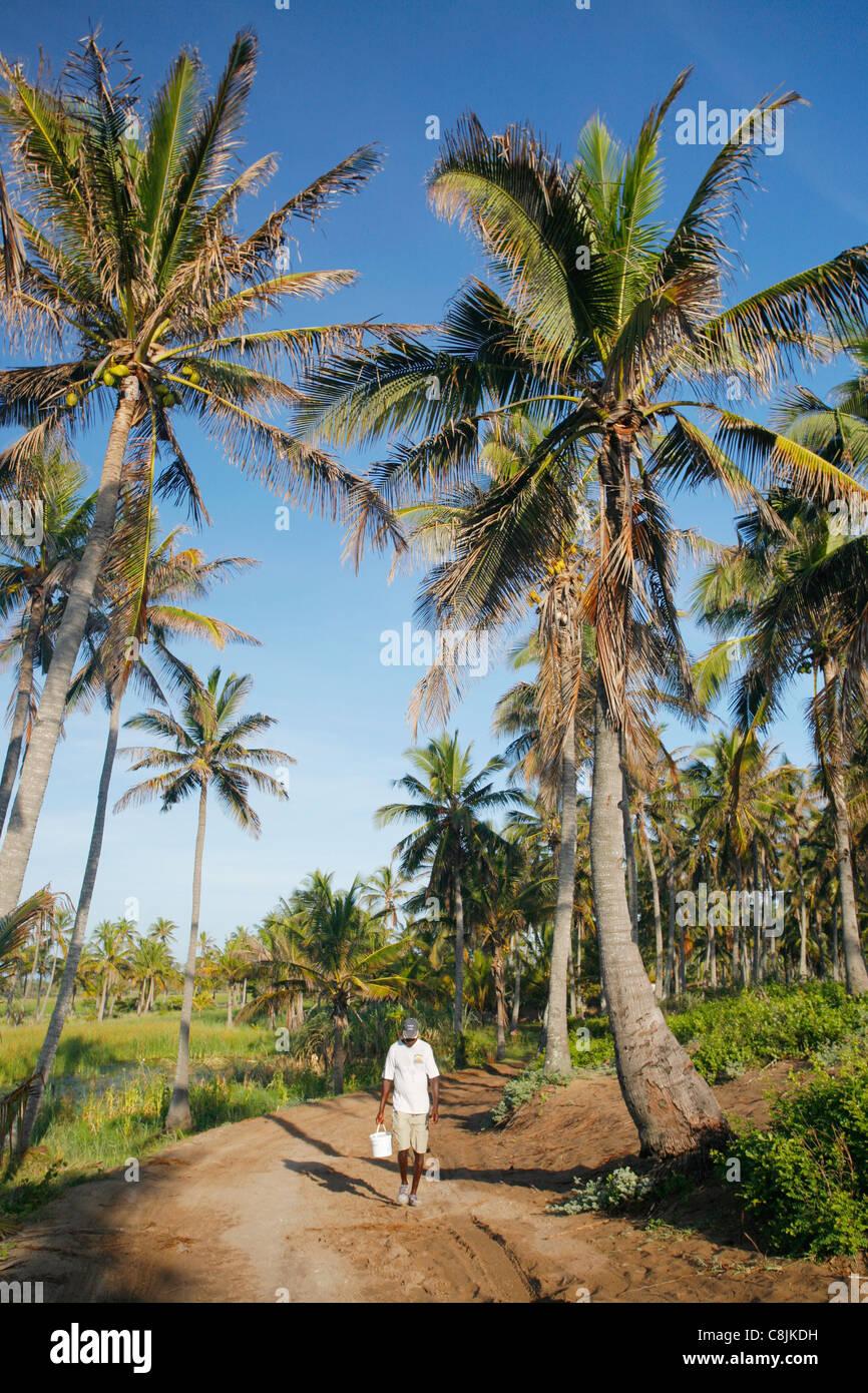 Hombre caminando por la calle con árboles de coco cerca de Tofo en Mozambique Imagen De Stock
