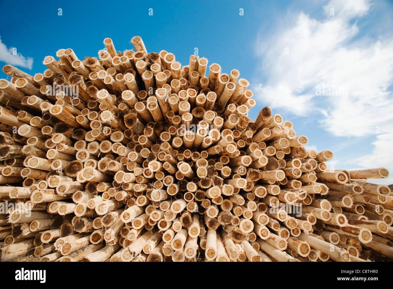 USA, Oregon, Boardman, pila de madera contra el cielo azul Imagen De Stock