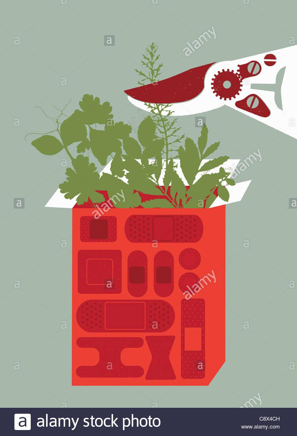 Clippers cortar las plantas que crecen en la casilla de vendas adhesivas Imagen De Stock
