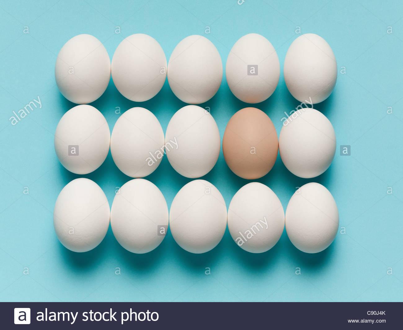 Huevo marrón con grandes huevos blancos Foto de stock
