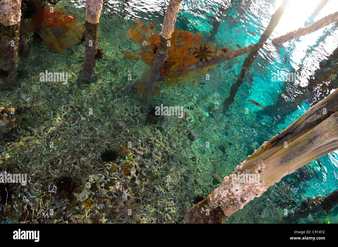 Embarcadero del arrecife de coral en aguas azules, Kri Eco Resort, Raja Ampat islas de Papua Occidental en el Océano Imagen De Stock