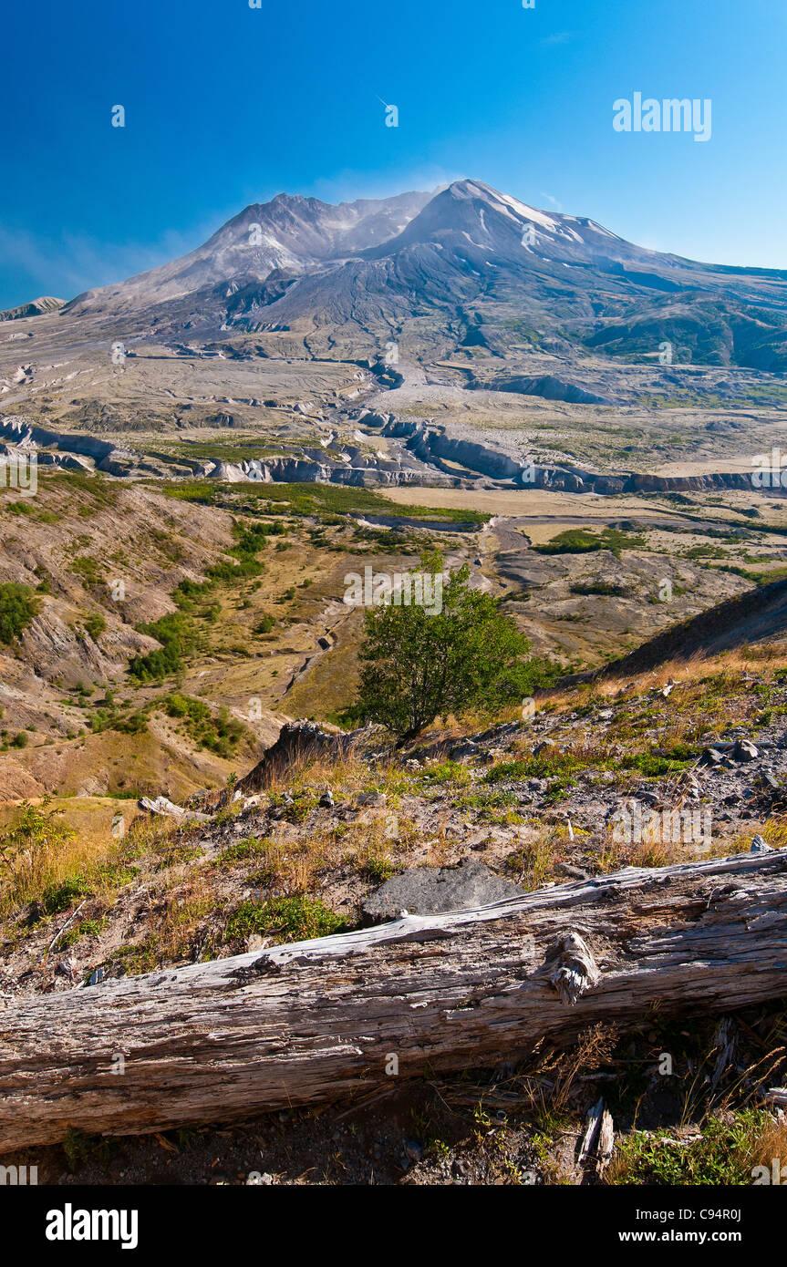 Vista panorámica del lado norte del Monte Santa Helena de árbol con tronco quemado, Johnston Ridge, Washington, Imagen De Stock