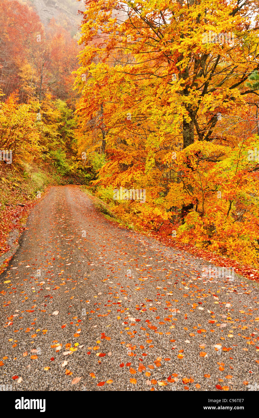 Escena de otoño de la carretera con las hojas de los árboles Imagen De Stock
