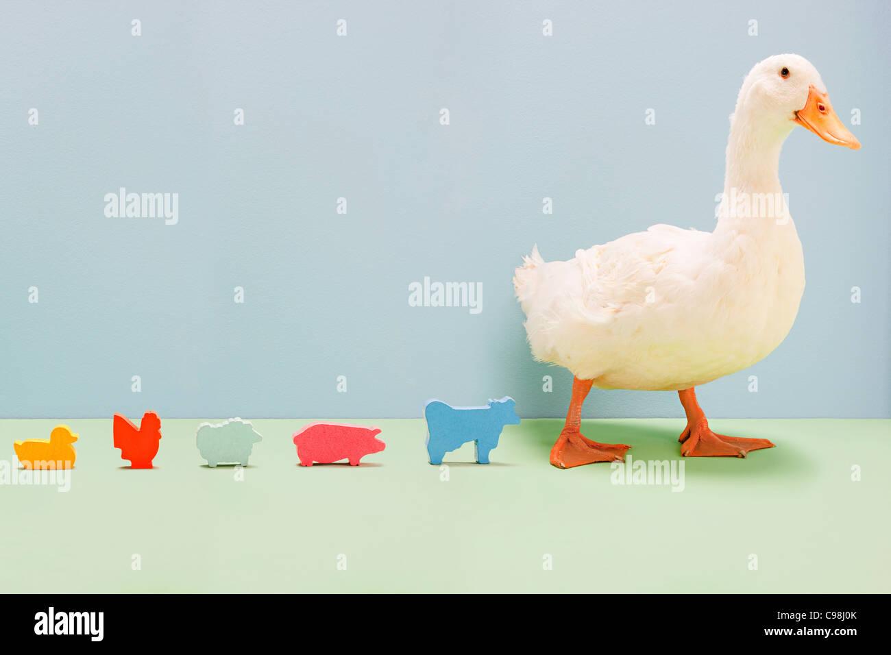 Pato caminando por la línea de animales de granja de juguete, Foto de estudio Foto de stock