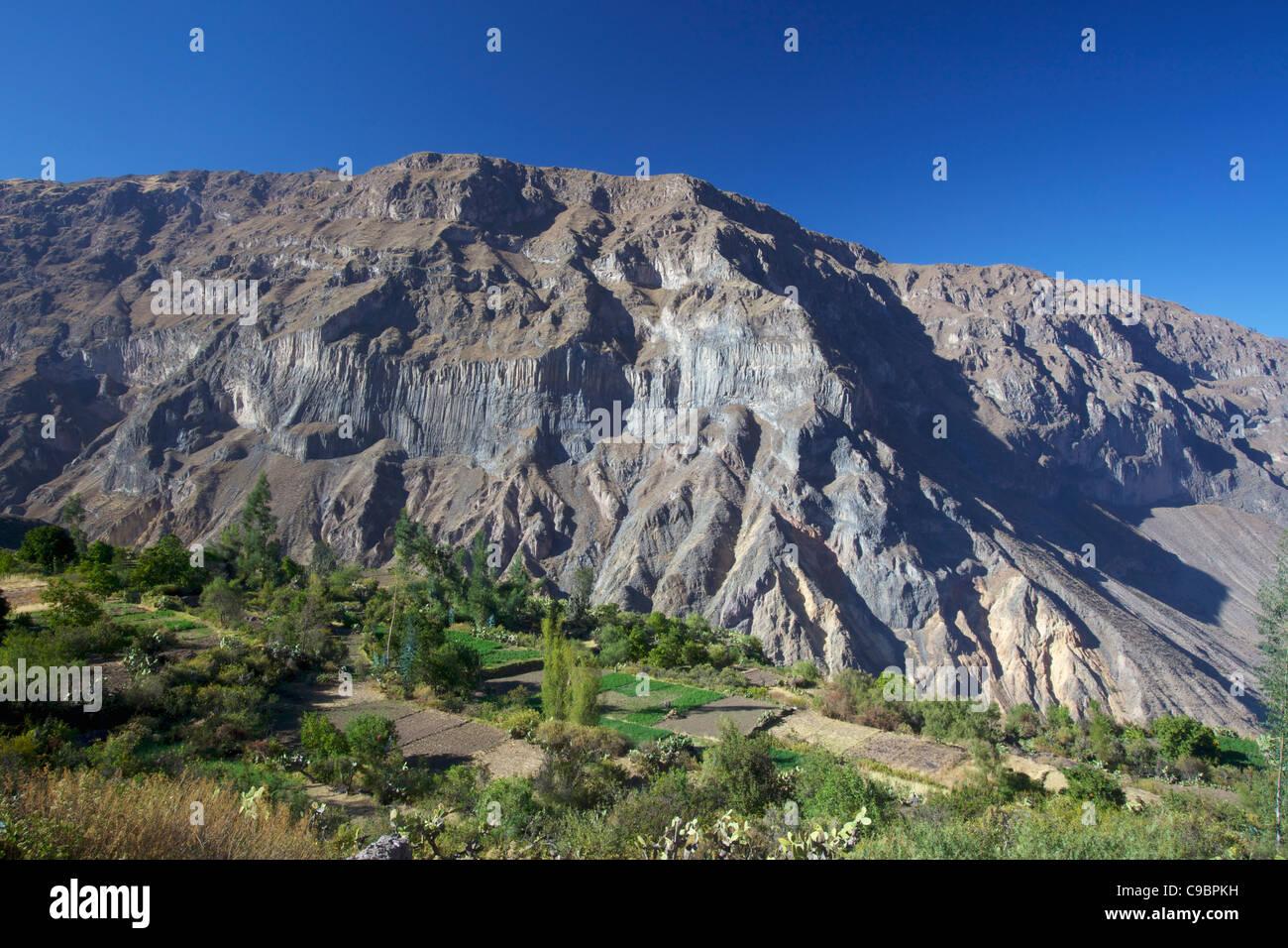 Los Cultivos En Terrazas En El Cañón Del Colca Canon Del