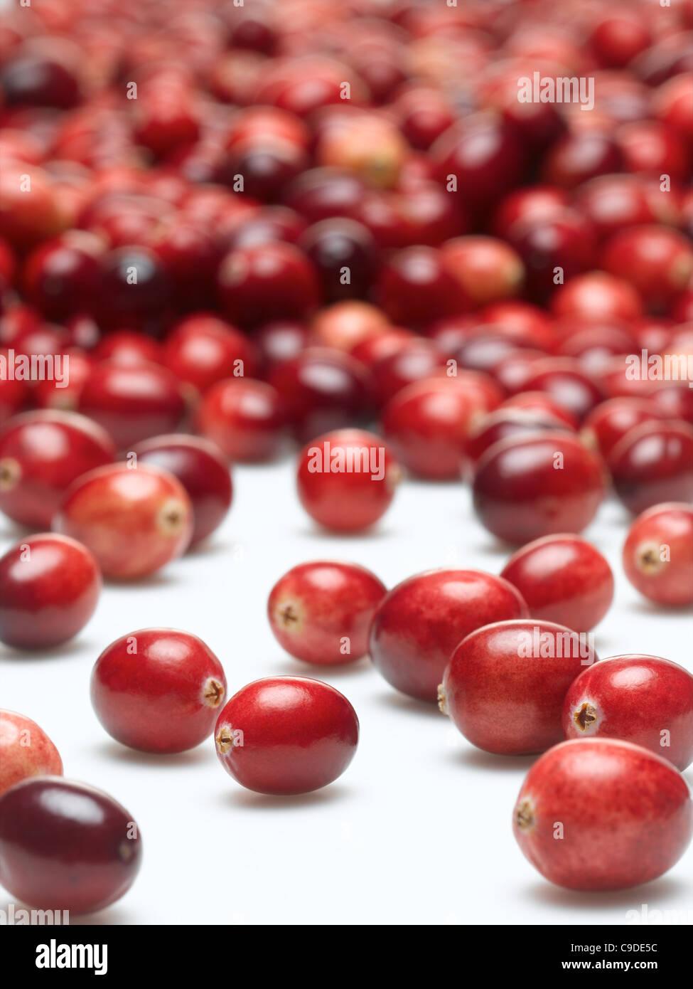 Arándanos rojos Imagen De Stock