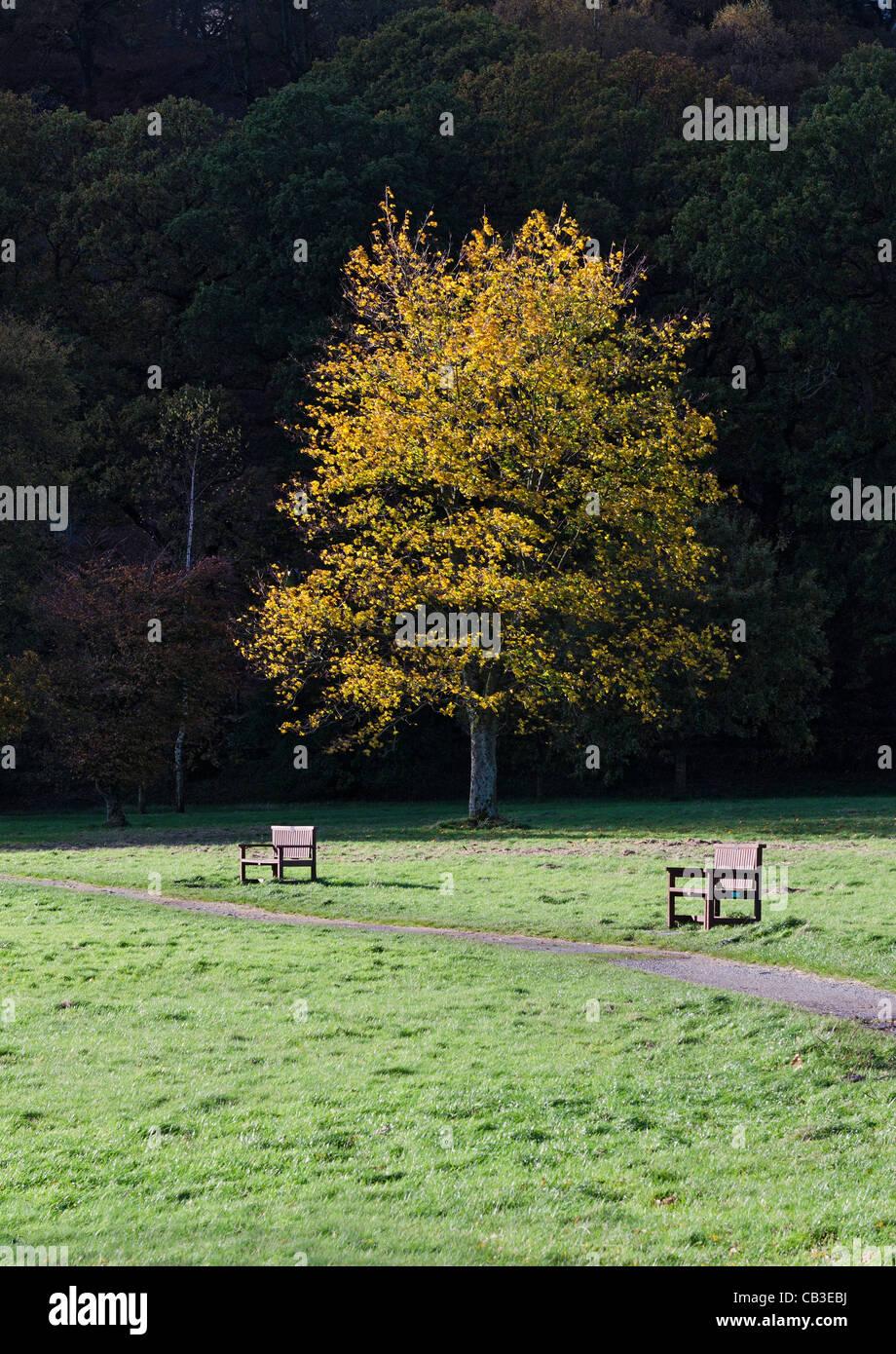 Parque en otoño Foto de stock