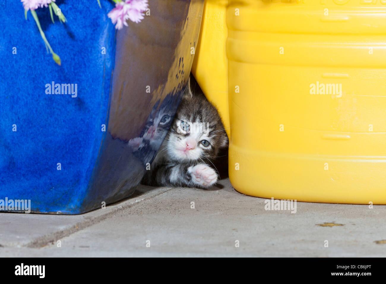 d92adcddc27cf Untensils Imágenes De Stock   Untensils Fotos De Stock - Alamy