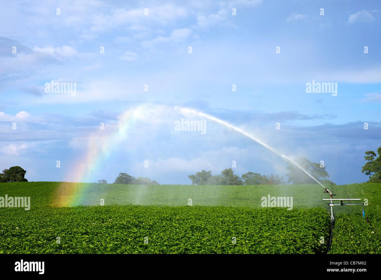 Rainbow formando en spray de agua de riego en un cultivo de papa cercano en junio de Oswestry, Shropshire, Inglaterra, Imagen De Stock