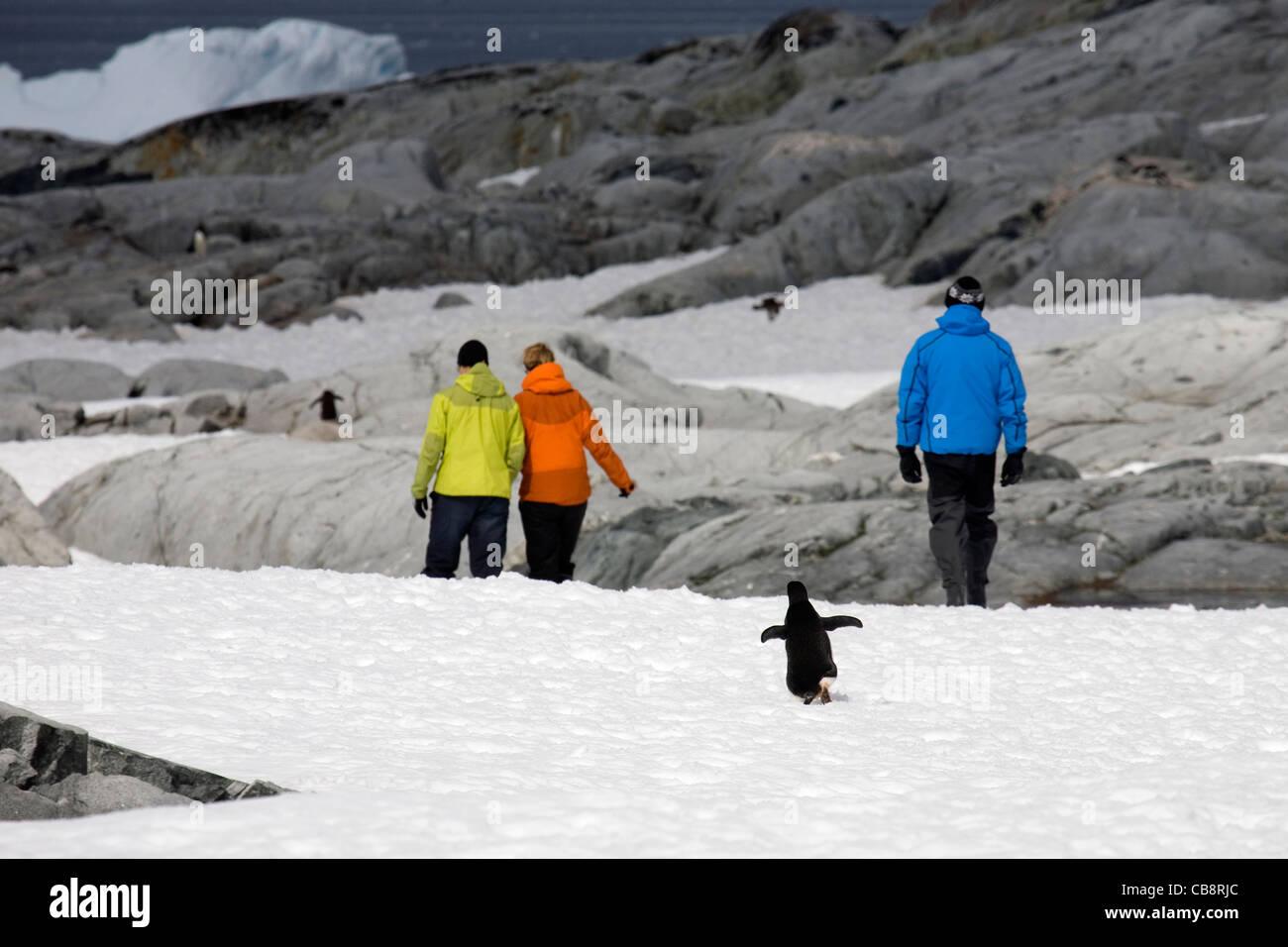 Eco-turismo con turistas caminando entre los pingüinos en la Isla Petermann, la Antártida Imagen De Stock