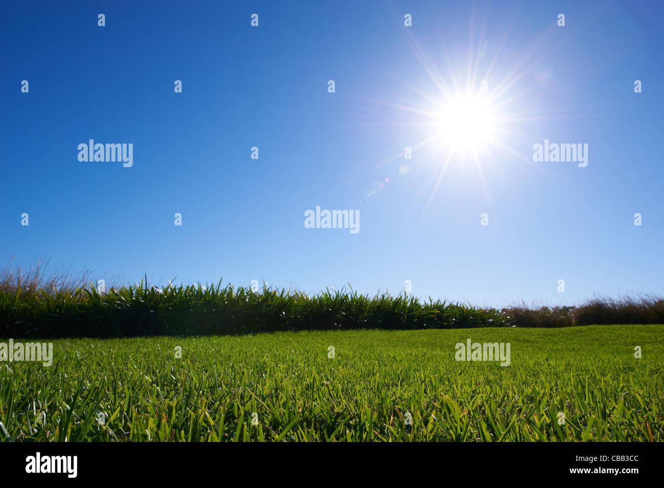 Exuberante verde césped soleado cielo azul Imagen De Stock