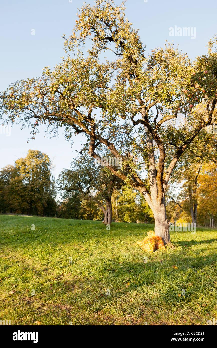 Árboles que crecen en el ámbito rural Imagen De Stock