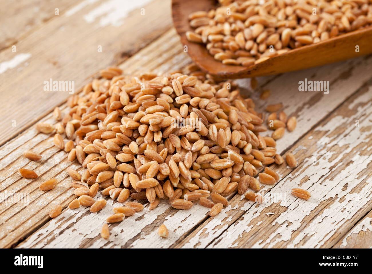 Boca de grano de trigo Farro (antigua) en boca de madera rústica contra la superficie de madera pintada en Imagen De Stock