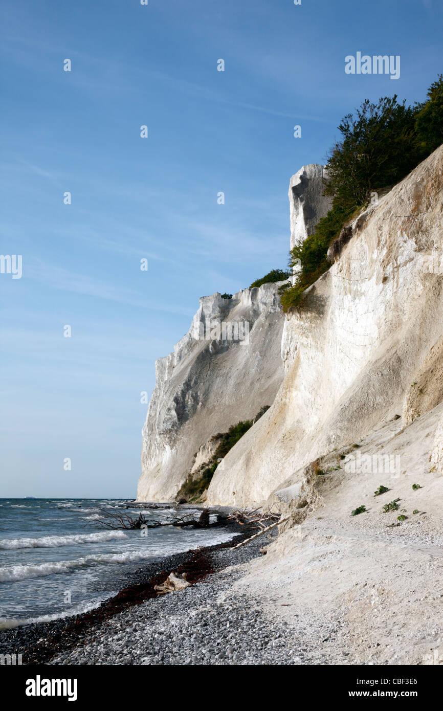 Møns Klint, los escarpados acantilados de tiza hasta 120 m sobre el nivel del mar en la costa del Mar Báltico oriental de la isla de Møn sudeste de Selandia, Dinamarca, Møn o Moen Foto de stock