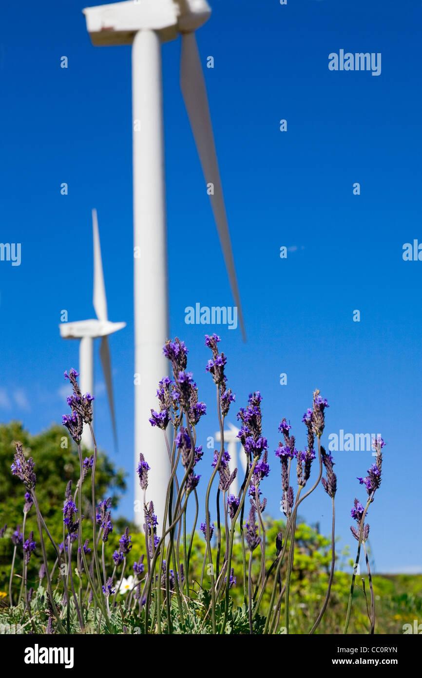 Lavanda silvestre contra el cielo azul con turbina eólica gigante como fondo Imagen De Stock