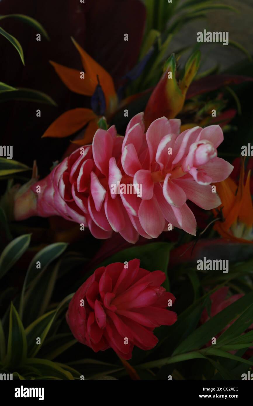 Jengibre Tropical Arreglo Floral Foto Imagen De Stock